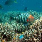 Dispersante de óleo ameaça corais no golfo do México
