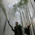 ALERTA: Pesticidas que matam insetos também estão diminuindo a população de aves.
